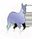 Nimbus Stallion